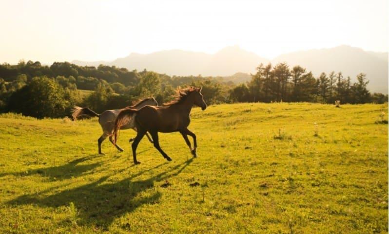 2頭の馬を対象とした馬券