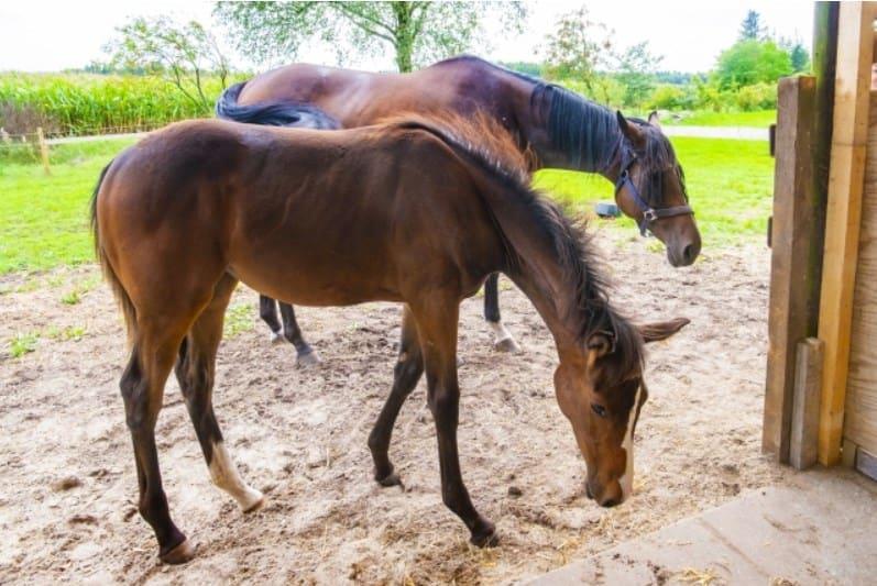 3頭の馬を対象とした馬券